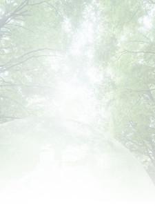 kiji_bg1.jpg